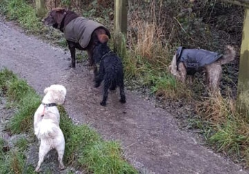 Mirfield Dog Walking Services